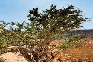 TopSeller Angebot Oman Salalah - Standortrundreise